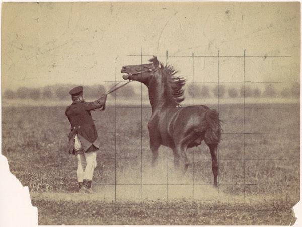 horse grid
