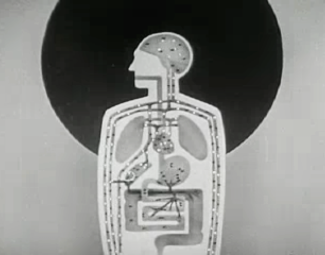 Alcohol and the Human Body (1949)