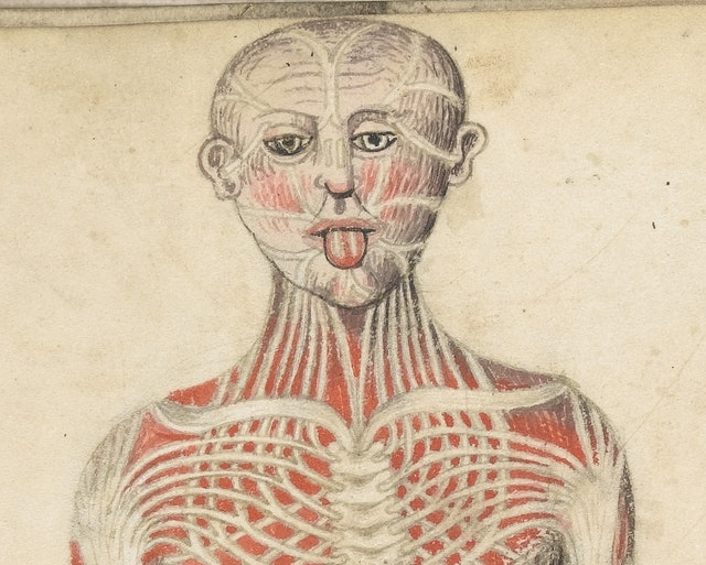 Anatomical Illustrations from 15th-century England