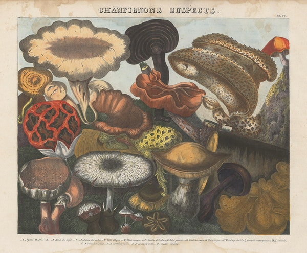 Lithograph of mushrooms