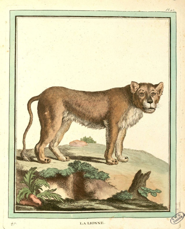 Buffon and de Sève's Quadrupeds (1754)