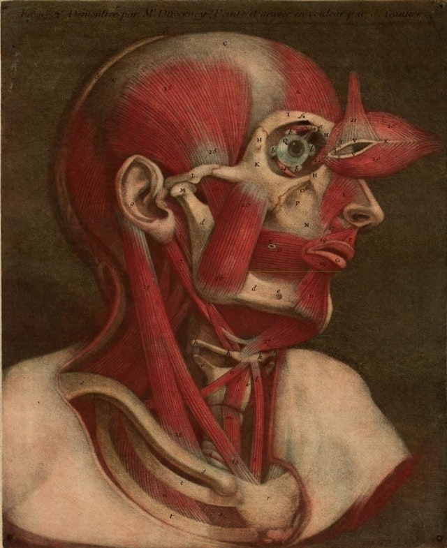 Coloured plates from Essai d'Anatomie (1745)