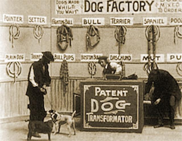 Dog Factory (1904)