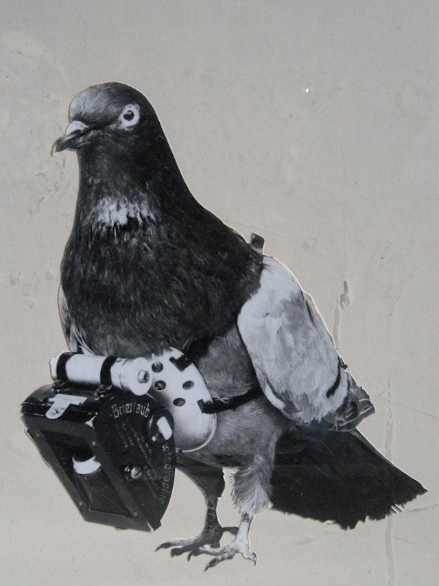 Dr Julius Neubronner's Miniature Pigeon Camera