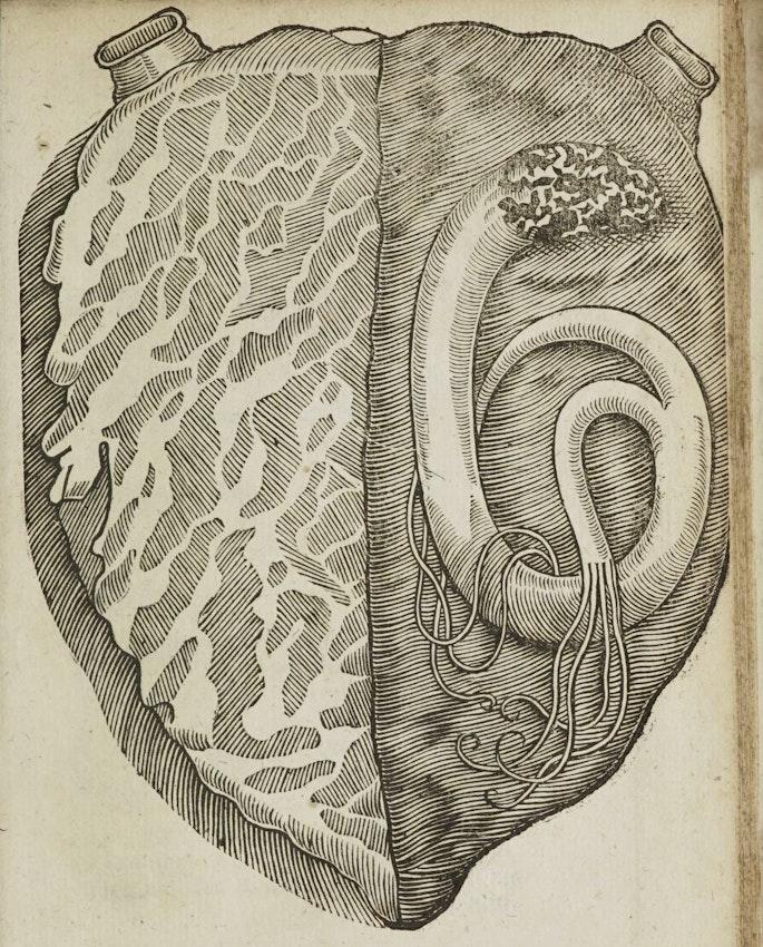 heart serpent image