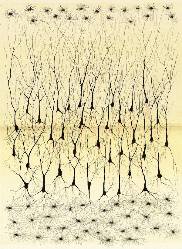 Camillo Golgi nervous system illustration