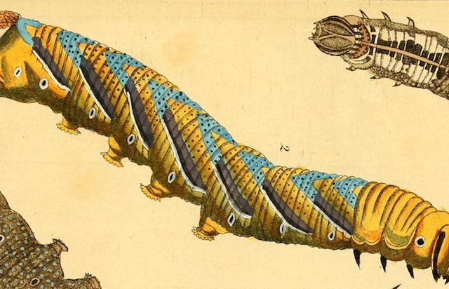 "Images from German ""Caterpillar Calendar"" (1837)"