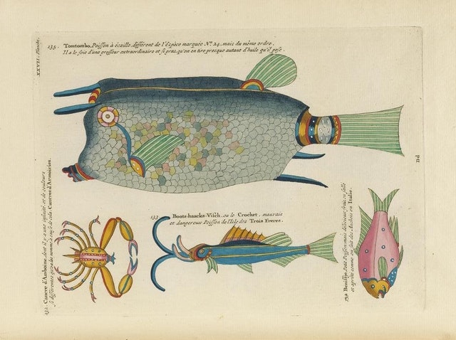 Images from the First Colour Publication on Fish (1754)