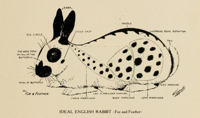 In Search of the Impossible: The Perfect English Rabbit