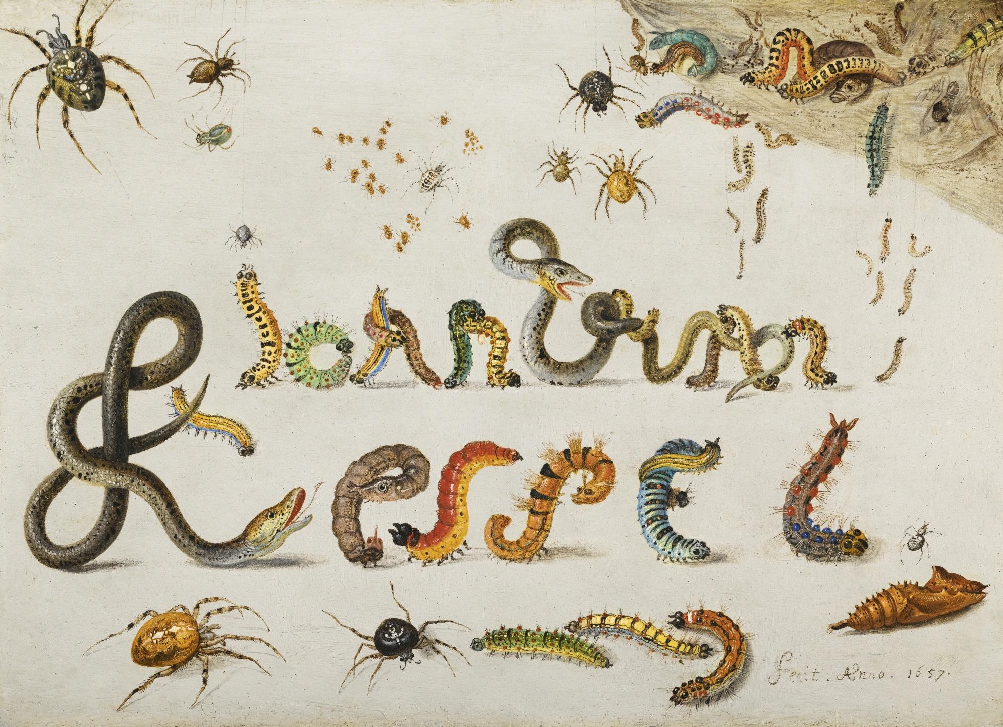 Jan van Kessel's Signature of Caterpillars and Snakes (1657)