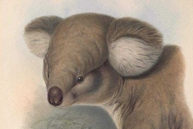 John Gould's Mammals of Australia (1845–63)