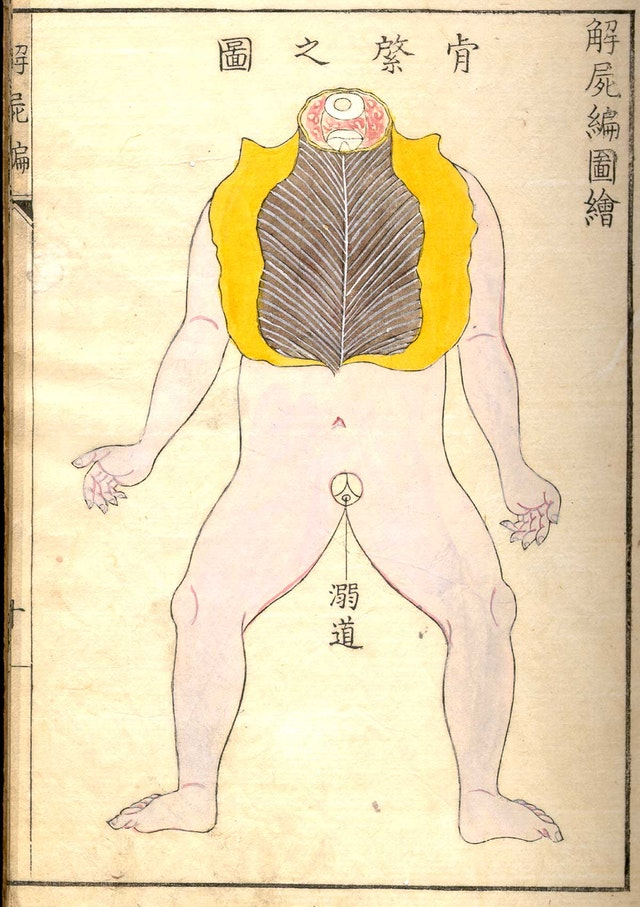 Kaishi Hen, an 18th Century Japanese anatomical atlas
