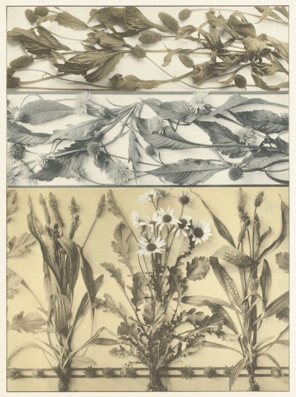martin gerlach decorative images of plants and animals