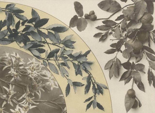 Festooned: Martin Gerlach's Decorative Groupings (1897)