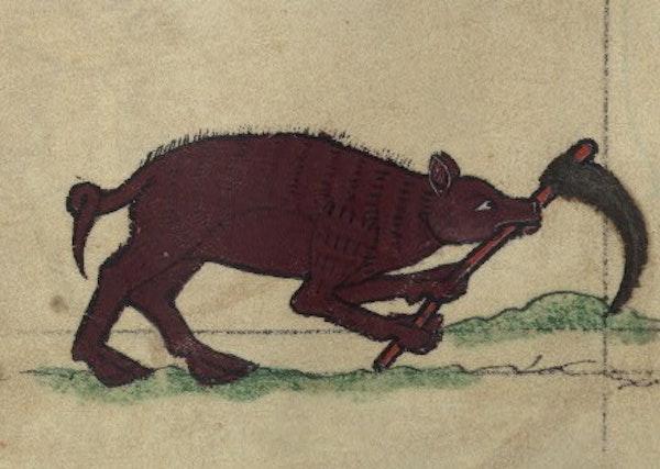 Boar digging a grave, detail from fol. 80v.