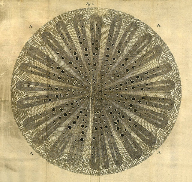 Nehemiah Grew's Anatomy of Plants (1680)