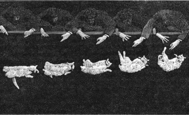 Photographs of a Falling Cat (1894)