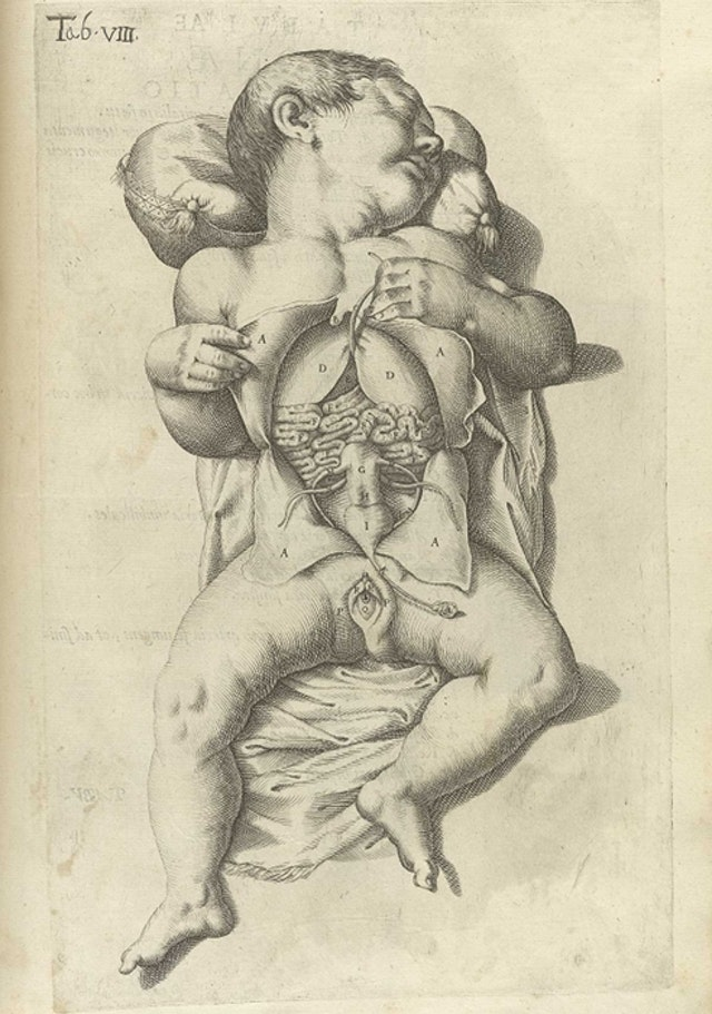 Plates from Spiegel's De formato foetu liber singularis (1626)