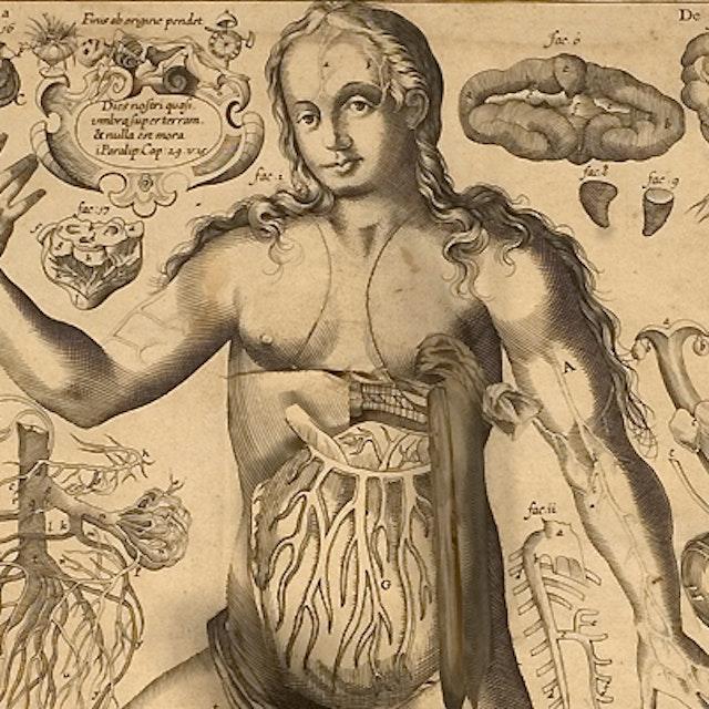 Remmelin's Anatomical 'Flap' Book (1667)