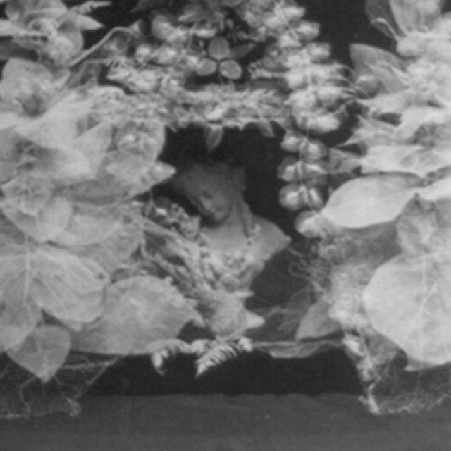 Skeleton Leaves (1873)
