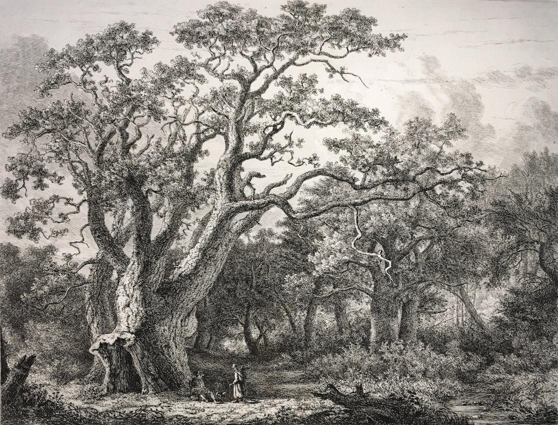 Engraving of the King Oak