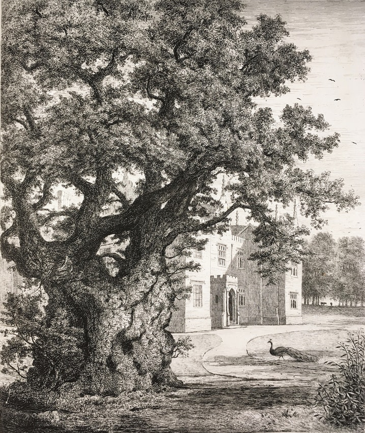Engraving of the Ancient Elm