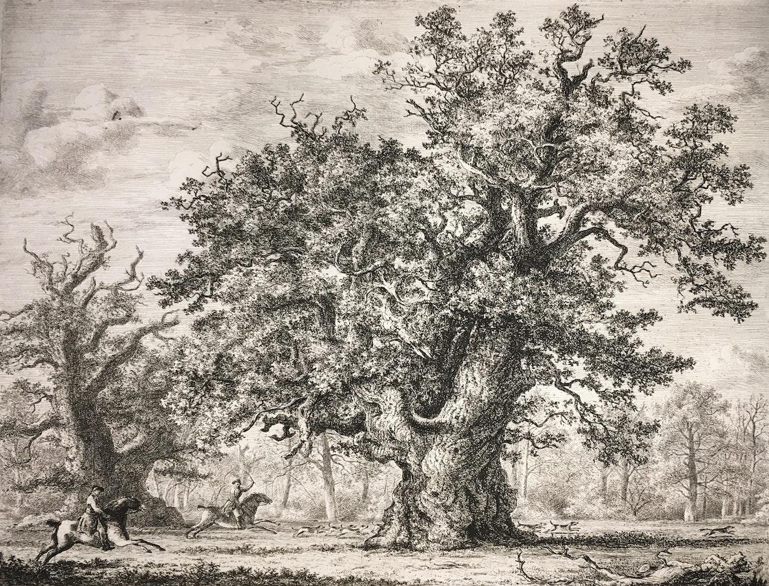Engraving of Gog and Magog oaks