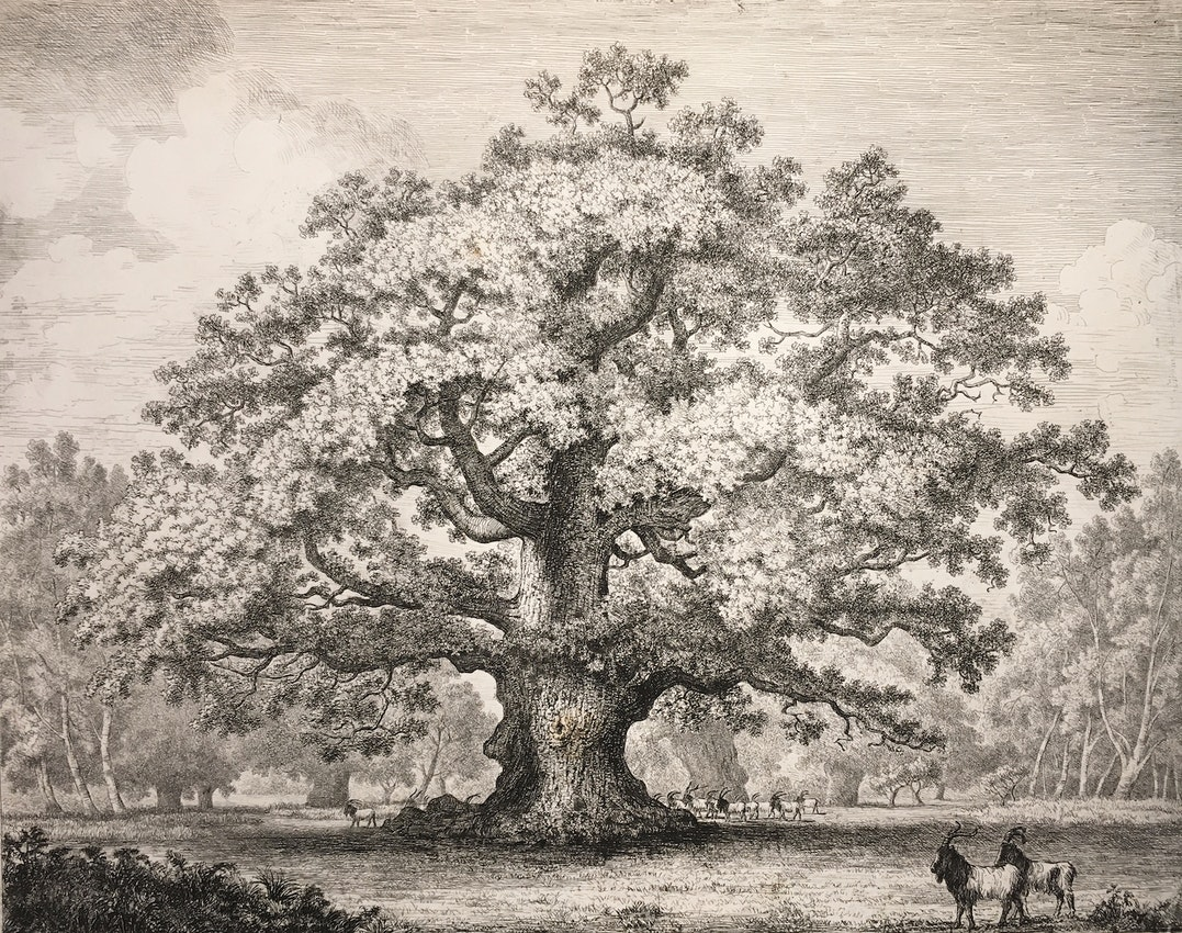 Engraving of the Beggar's Oak