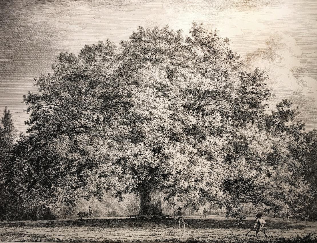 Engraving of the Chandos Oak