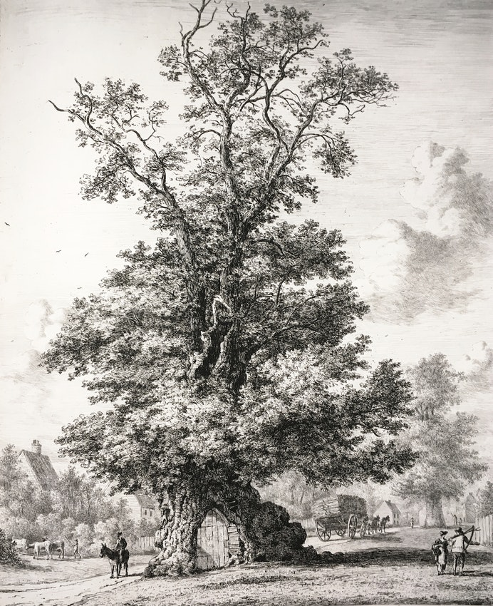 Engraving of the Crawley Elm