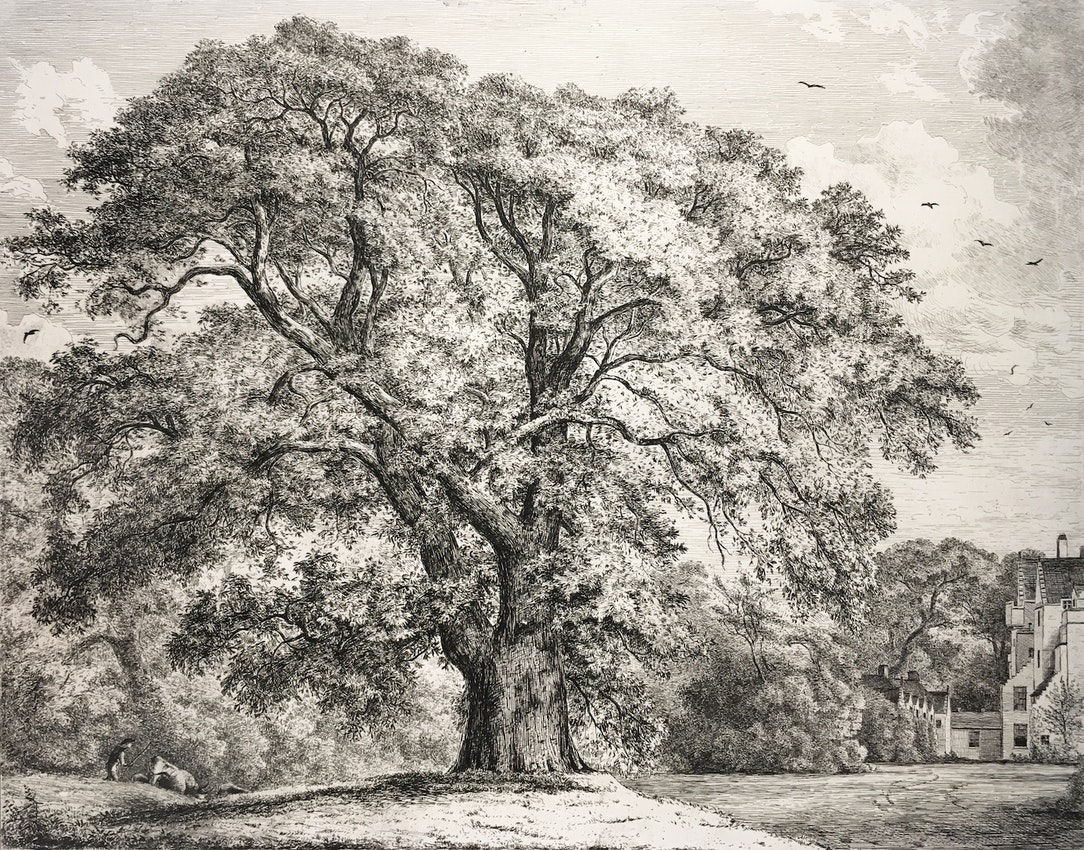 Engraving of the Great Ash