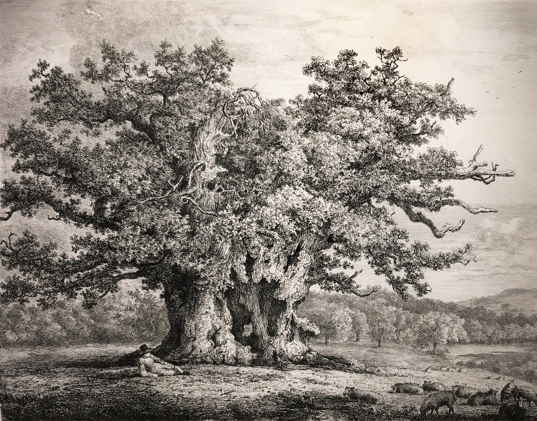 Engraving of the Great Oak