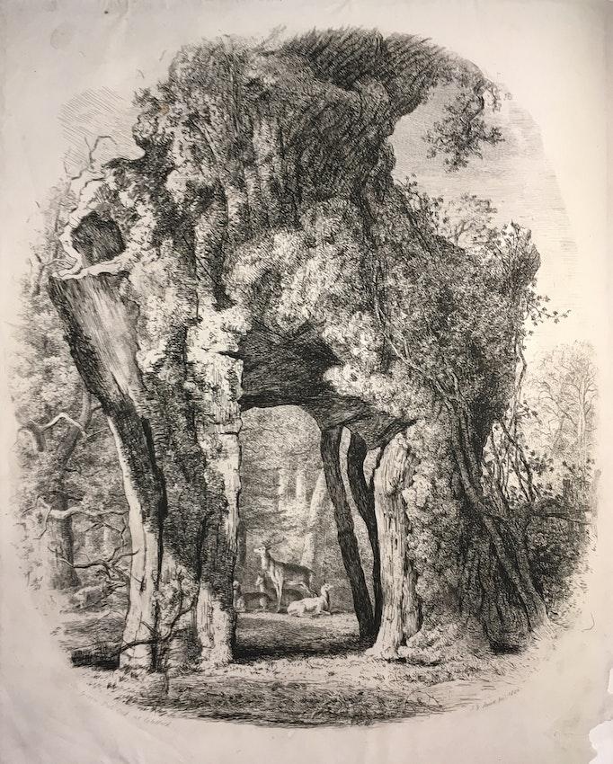 Engraving of the Greendale Oak