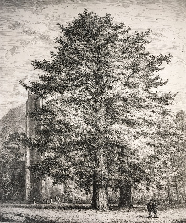 Engraving of the Larches