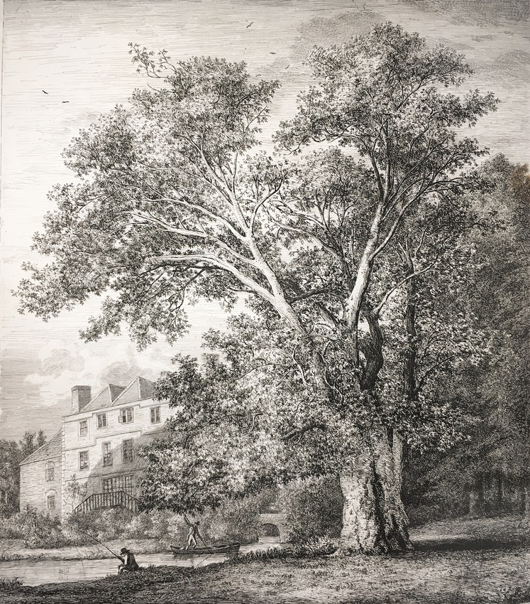 Engraving of the Oriental Plane