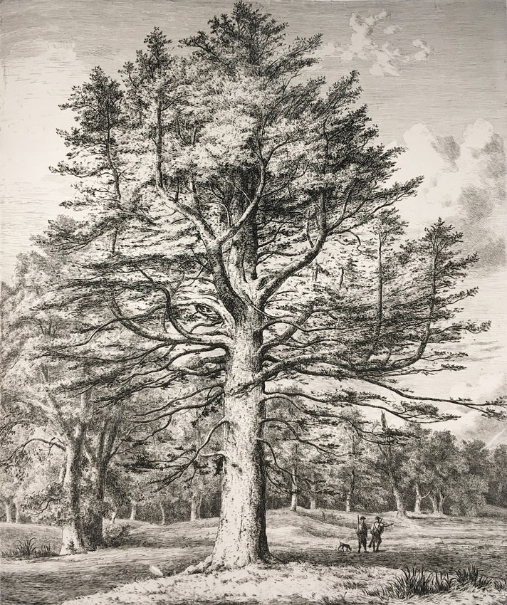 Engraving of the Silver Fir
