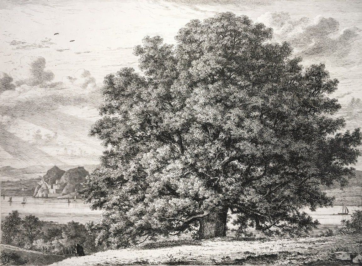Engraving of the Sycamore
