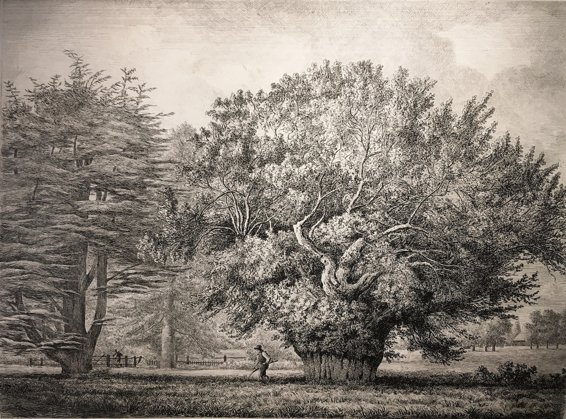 Engraving of the Yew Tree