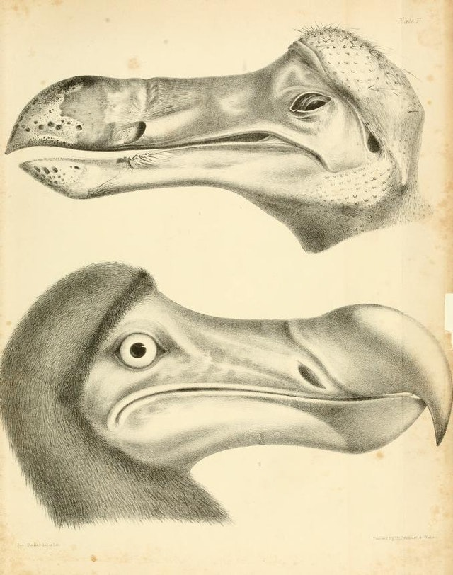 The Dodo and its Kindred (1848)