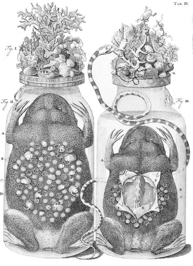 The Embalming Jars of Frederik Ruysch