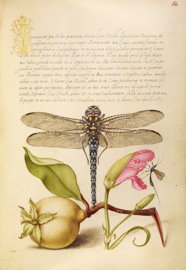 Dragonfly, Pear, Carnation, and Insect