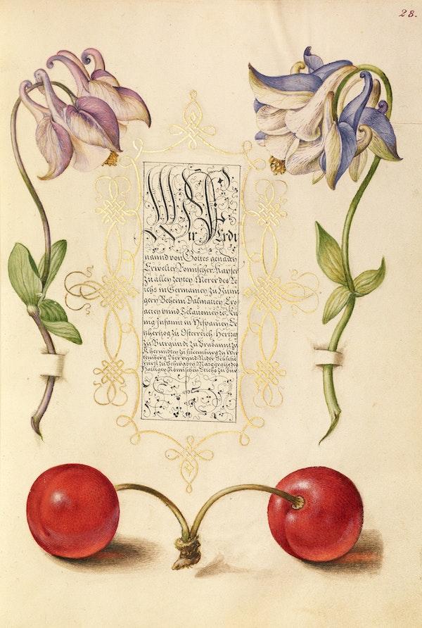 European Columbines and Sweet Cherry