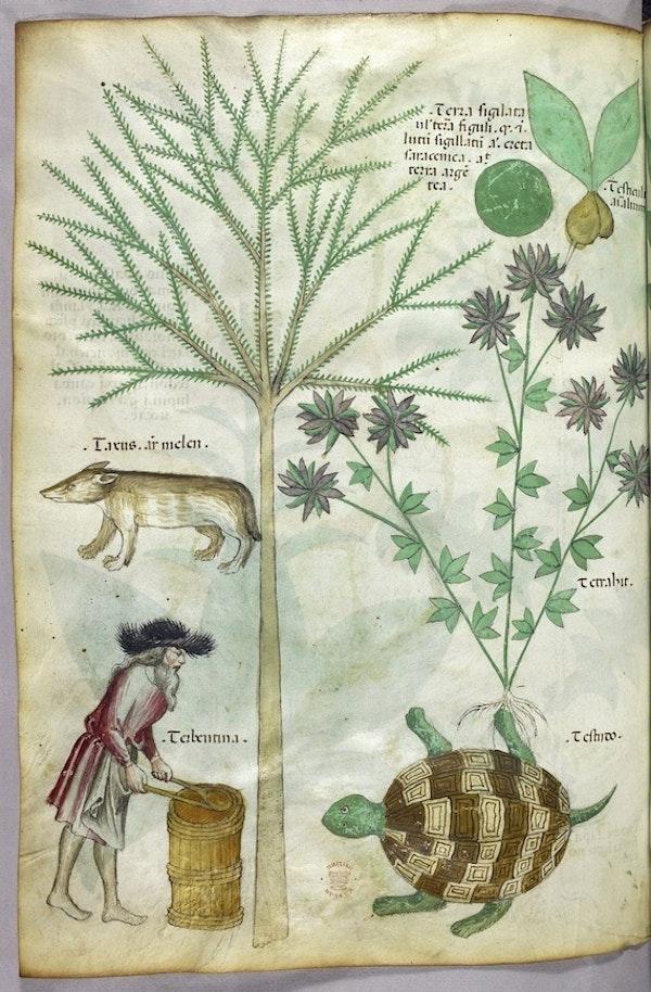 herbal tortoise