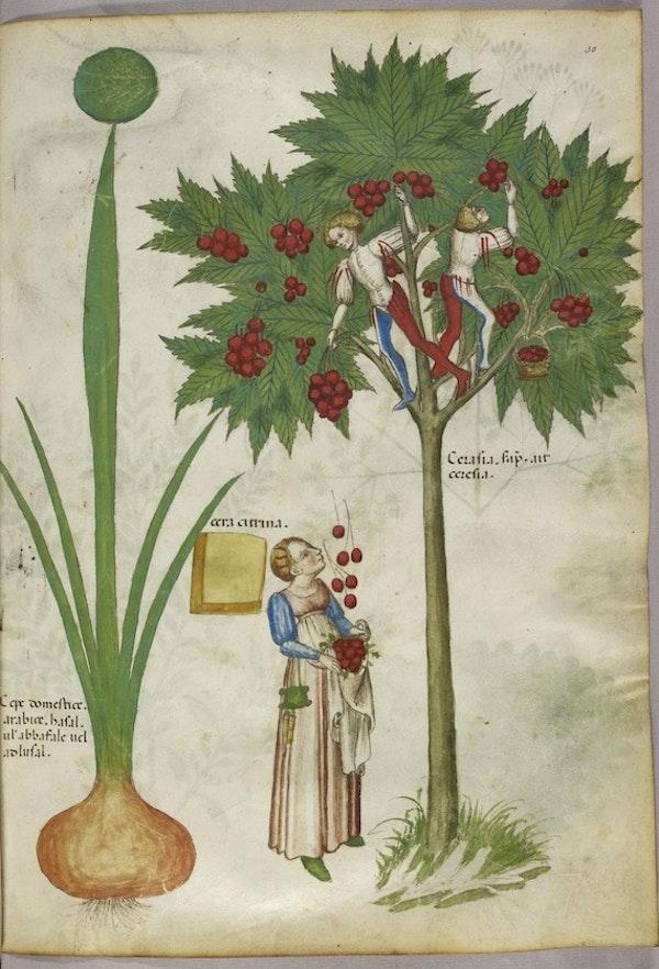 sloane herbal fruitpicking