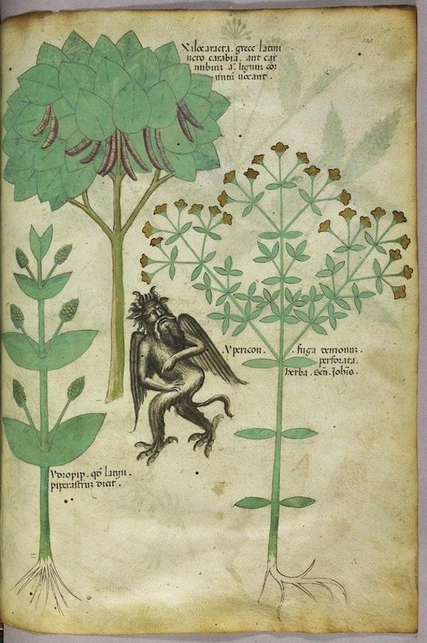 sloane herbal repel devil