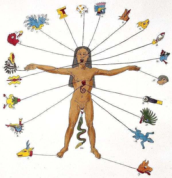 zodiac man illustration