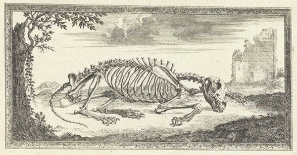 Accuracy and Elegance in Cheselden's Osteographia (1733)