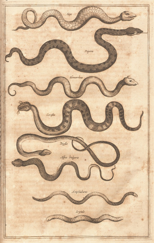 kircher snakes