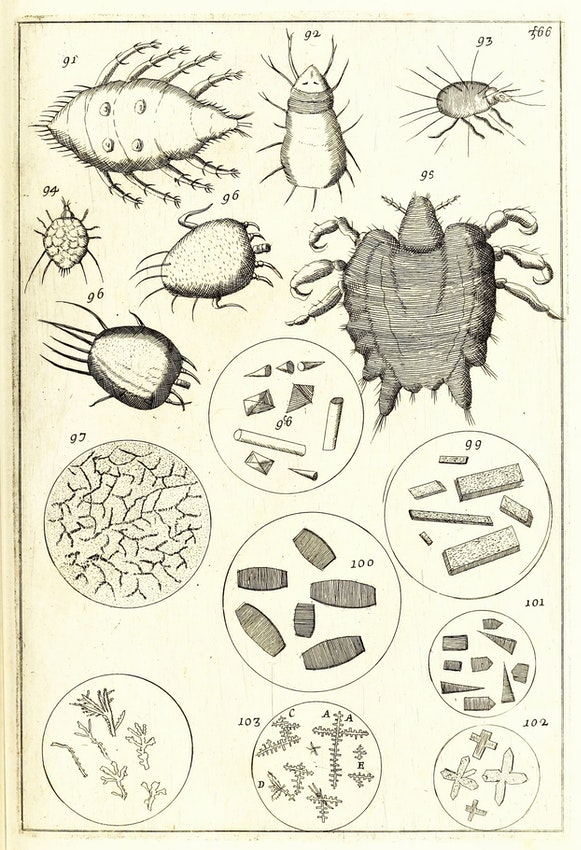 17th-century microscope illustration
