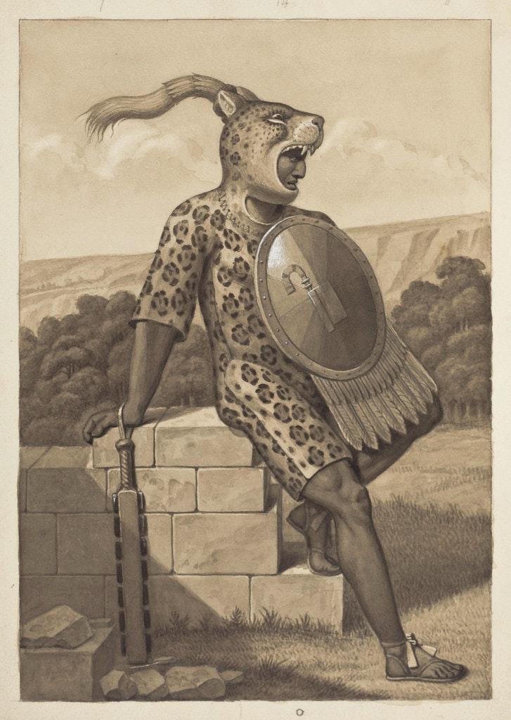 leopard waldeck